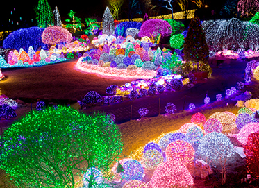 Lighting Festival at The Garden of Morning Calm